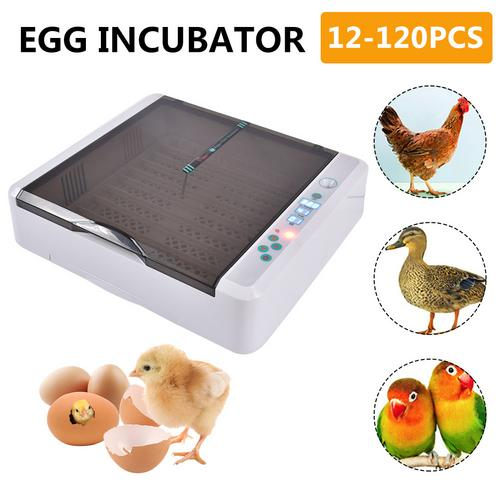 New Design automatic 36 chicken egg incubator